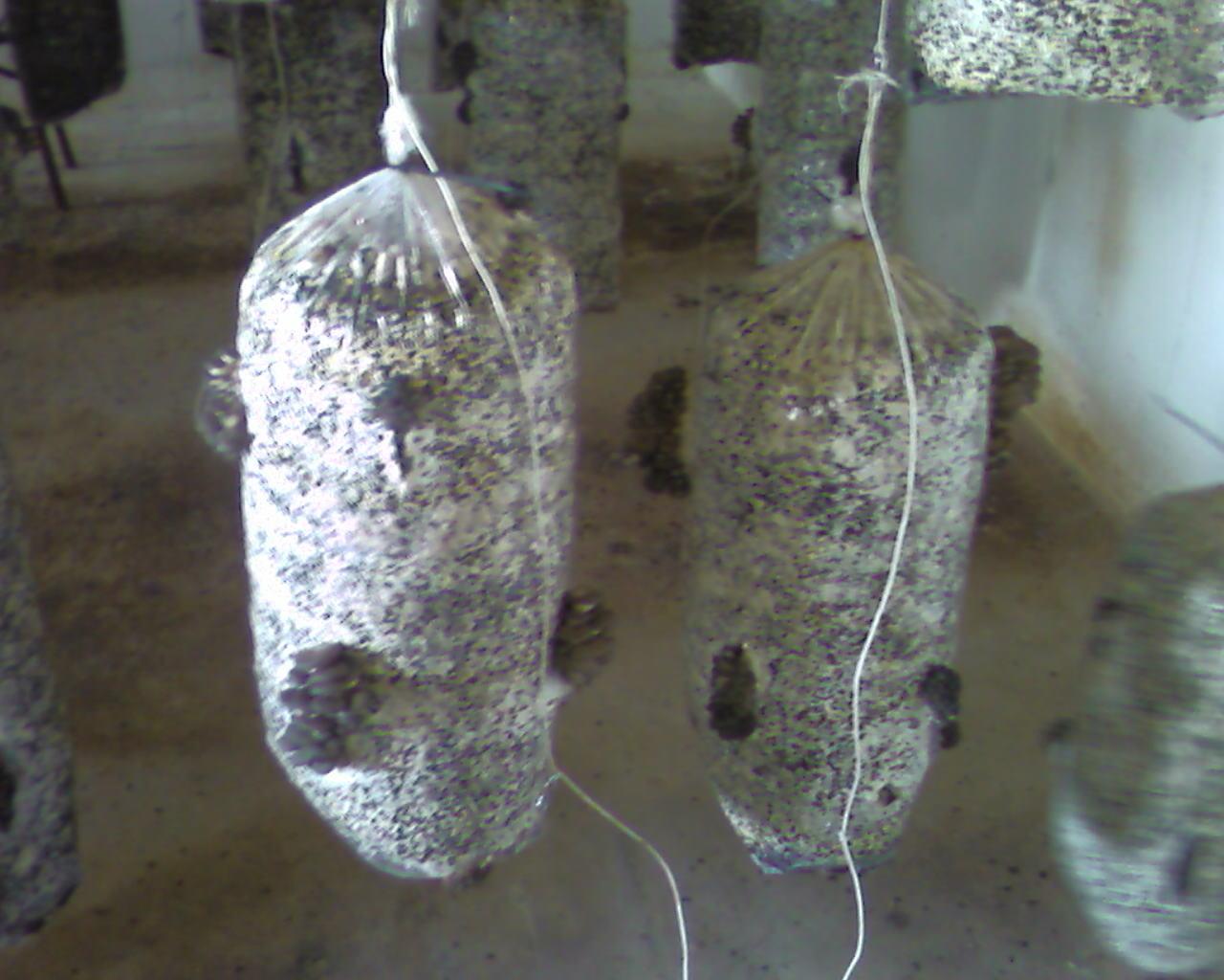 Как хранить мицелий в домашних условиях